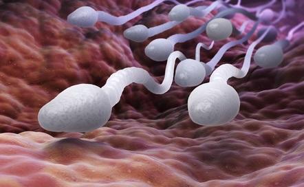sperme à offrir
