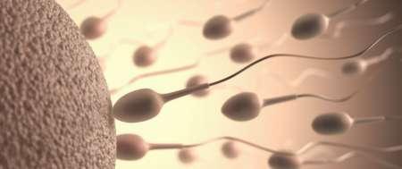 don de sperme 974